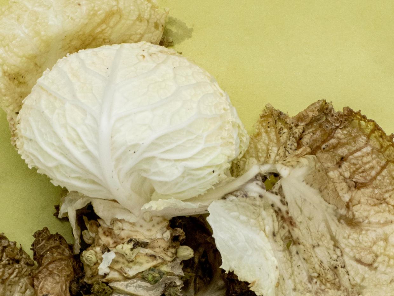 Återvinning av matavfall är avgörande för ett hållbart resursutnyttjande.